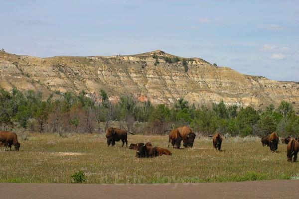 Badlands 8 - North Dakota Badlands
