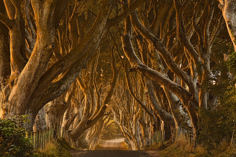 Early Morning At The Dark Hedges