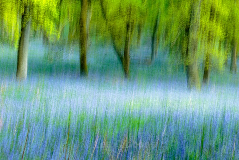 bluebell impressions - Perthshire