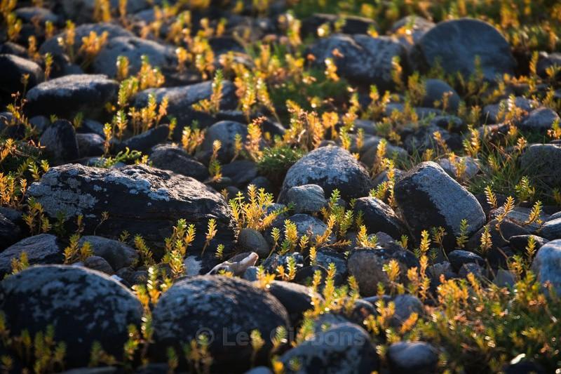 Ferns - Highlands and Islands