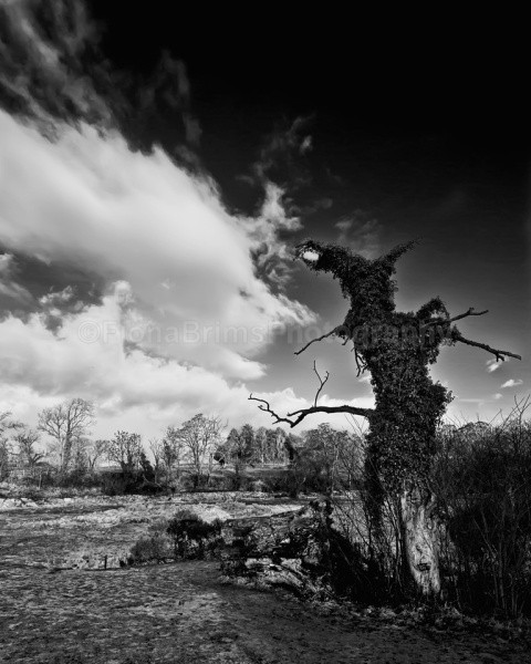 tree and river - Landscapes and Seascapes