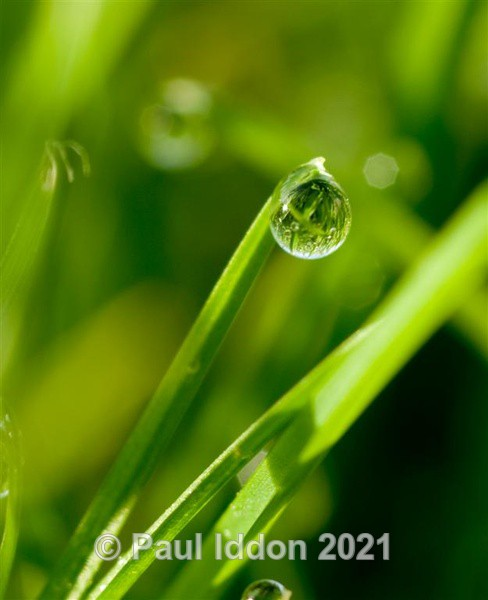 Dewdrop on the edge - Macro