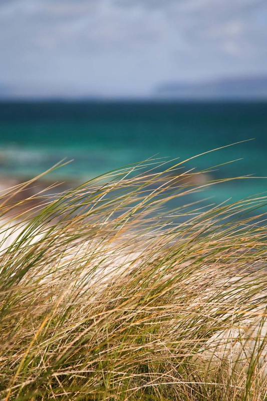 grasses - Mull and Iona