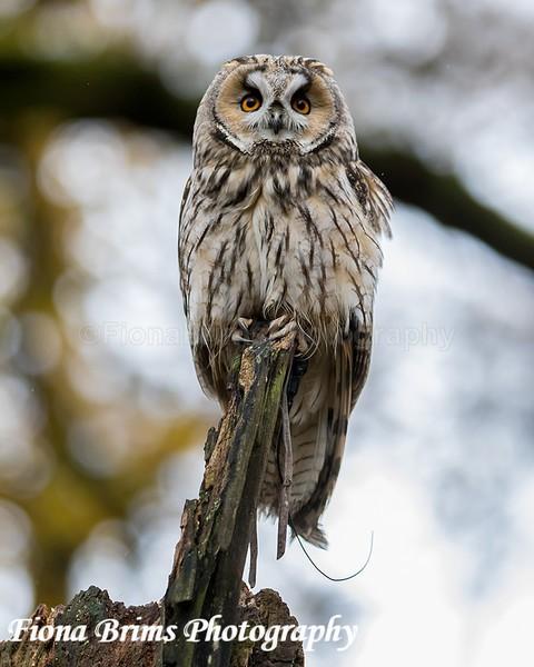 wow woodland walk-16 - Birds of Prey