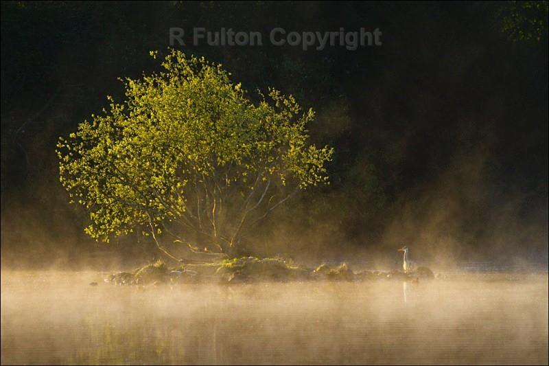 Tree, Heron & Mist - Landscapes