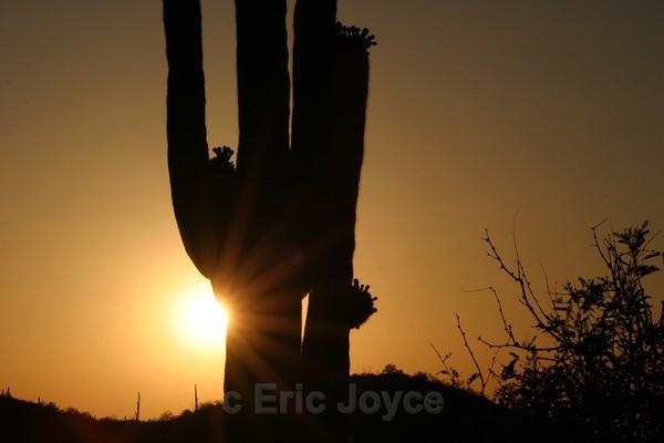 Saguaro flare - Tuscon, Arizona