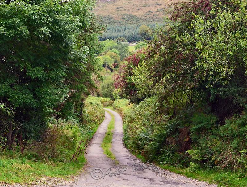 Near Tinahely Wicklow - Ireland