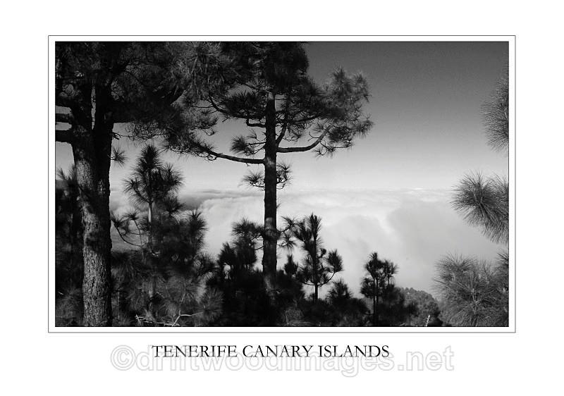Tenerife view trees and cloud top - Tenerife Mount Teidi