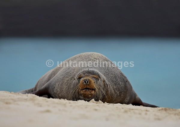Galápagos Beachmaster 1 - Galapágos