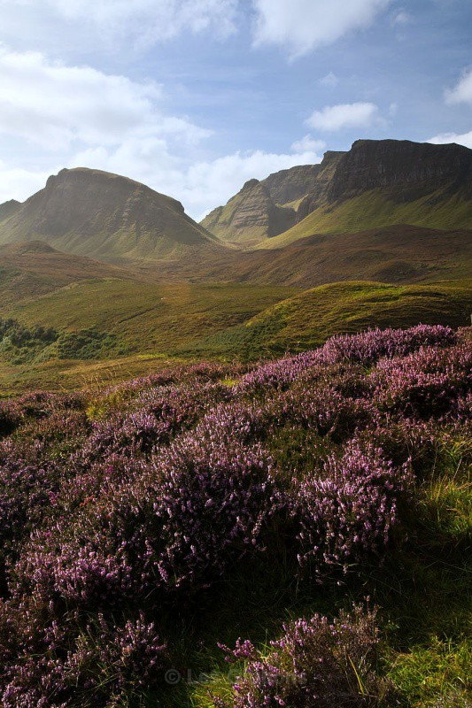 Heather and the Quirang - Highlands and Islands
