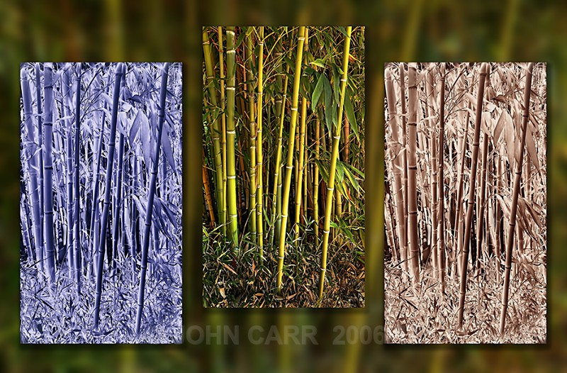 Bamboo-1-Triptych-HDR - MONTAGES