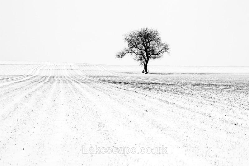 Undulations_5986_B&W - Trees