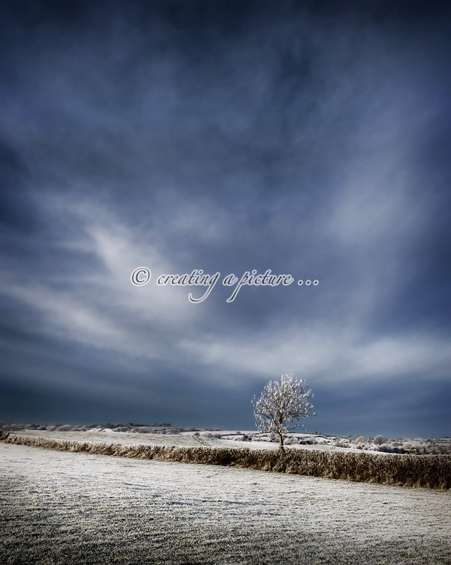 Lone Frosted Tree - Landscapes