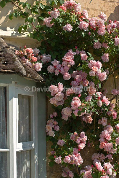 Rose window - Gardens & plants