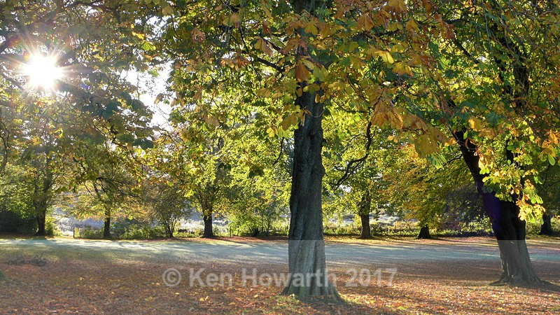 Autumn in Fletcher Park, Kendal - Lakeland Landscapes