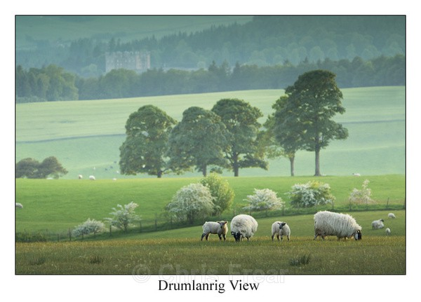 Drumlanrig View - Traditional Landscapes