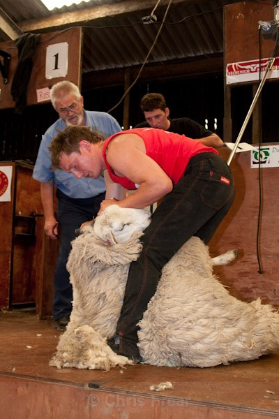 6 - Shearing Competition