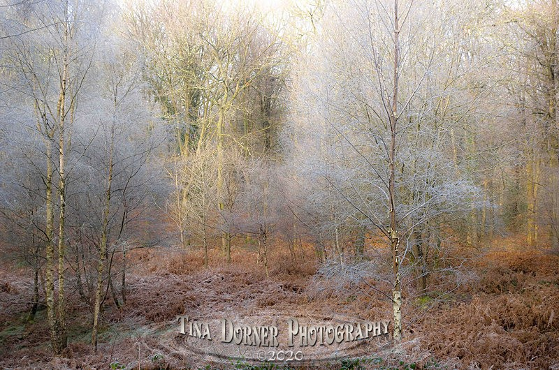 Frost Pocket Forest