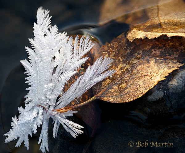 Ice and Leaf - Flowers, Leaves and Ferns