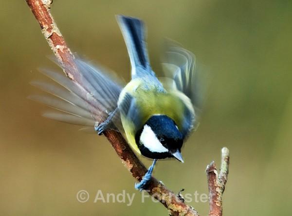 Beating Wings - Birds