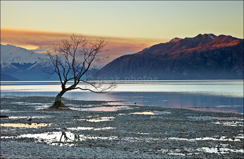 Wanaka Tree - Photographs of New Zealand