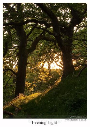 Evening Light - Traditional Landscapes