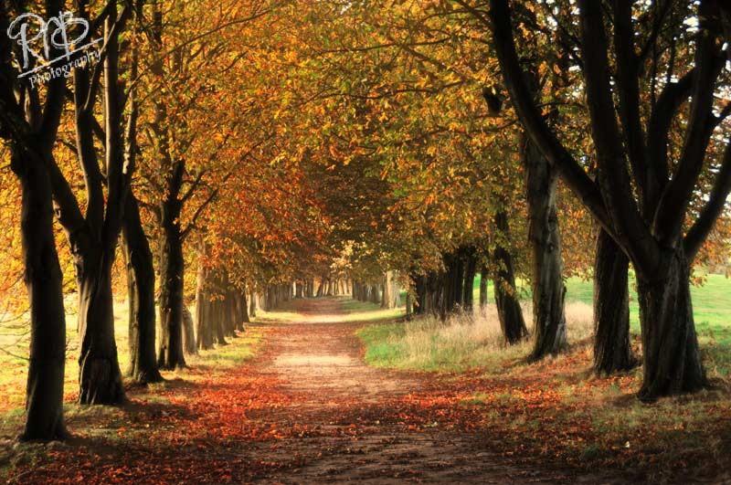 Autumn Avenue - Wiltshire & West Country Landscapes