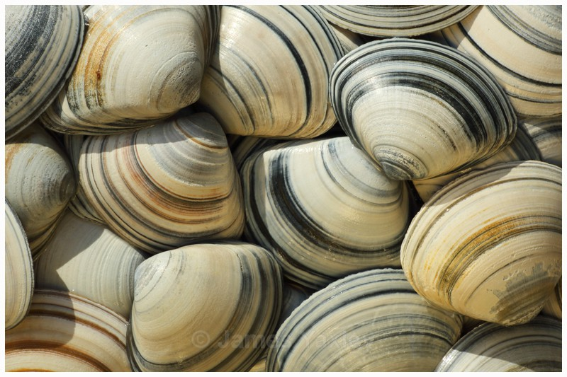 Trough Shells - Latest Work