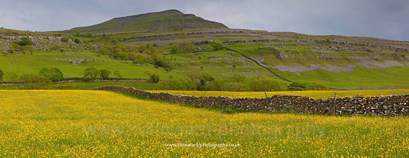 Buttercup Meadow with Ingleborough in the background. - The Pennines and The Lake District
