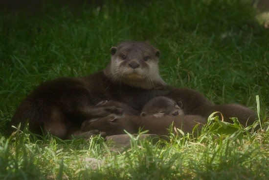 2 - Otters