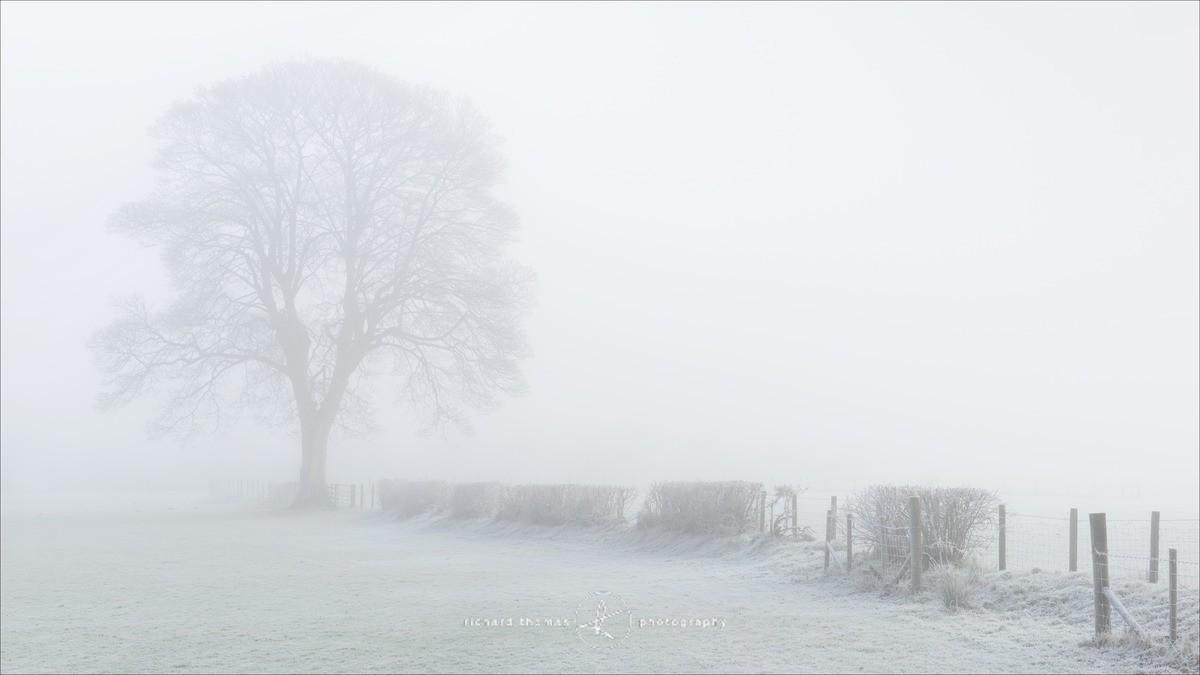 Winter tree - Hawkshead, Lake District. - WINTER