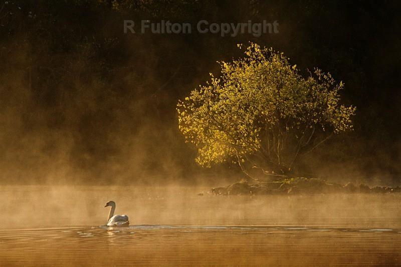 Swan & Tree - Landscapes