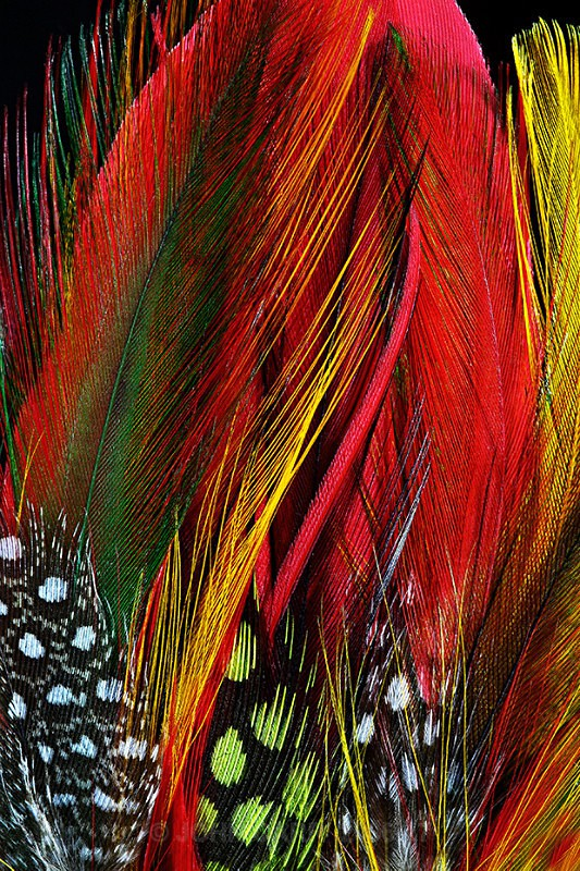 FEATHERS-5-3928 - ABSTRACT DETAIL/CLOSE UP PHOTOS