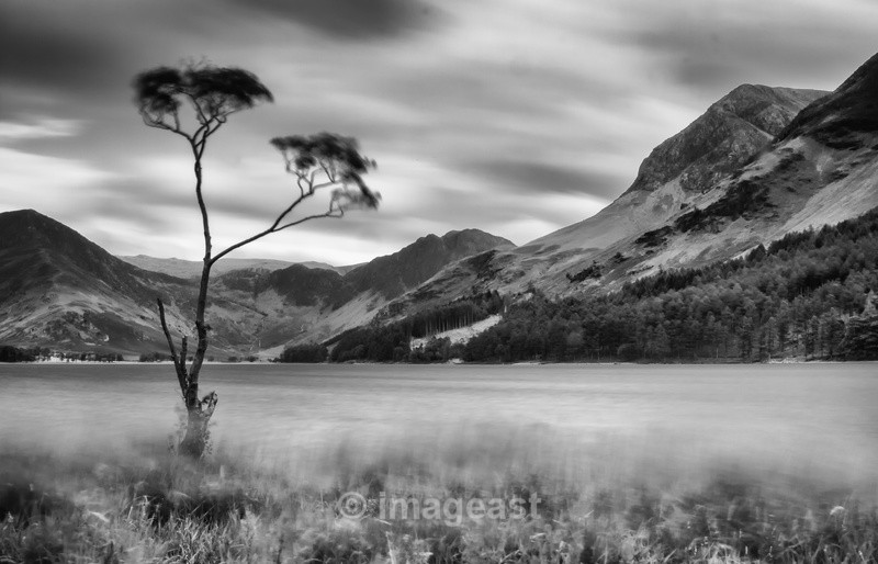 Buttermere Tree - The Gallery