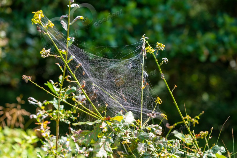 spider web-8096 - Insects from around the world