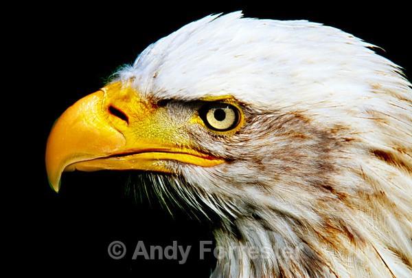Mr Big Close Up! - Falconry
