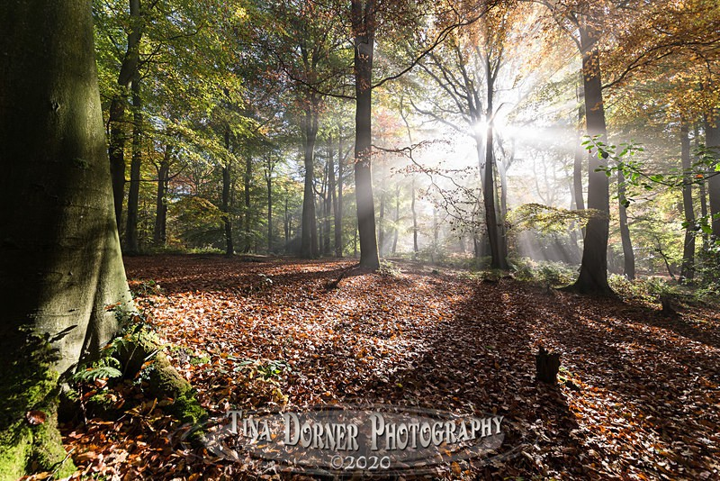 Sun Wood Streams. Autumn Forest of Dean. Tina Dorner Photography