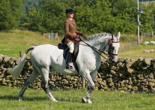 154 - Moniaive Horse Show 2008