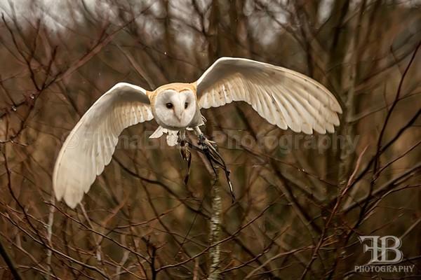 wow march-15 - Birds of Prey