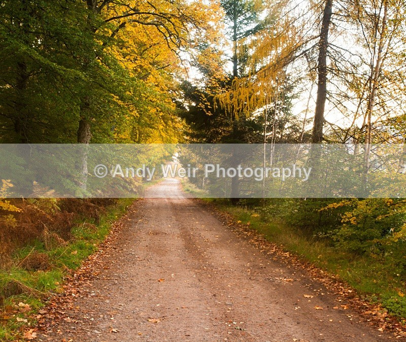 20101024-2938 - Scotland