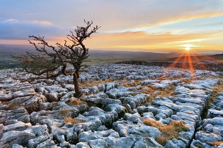 Hawthorn Tree Twistleton Scar End | Limestone Pavement