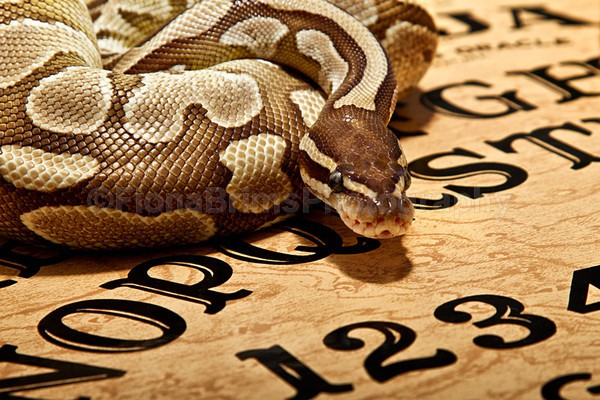 animals-2 - Reptile Photography