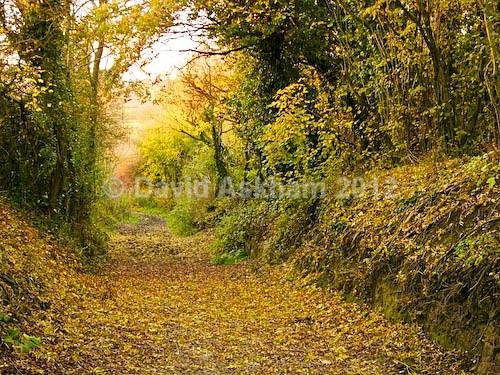 Historic track - Autumn