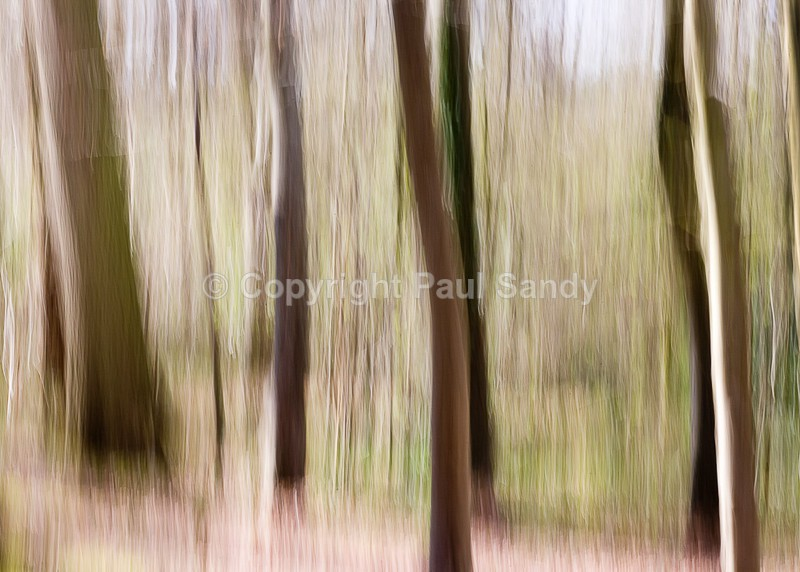 Stoke Woods, Exeter - Seeing the Wood AND the Trees
