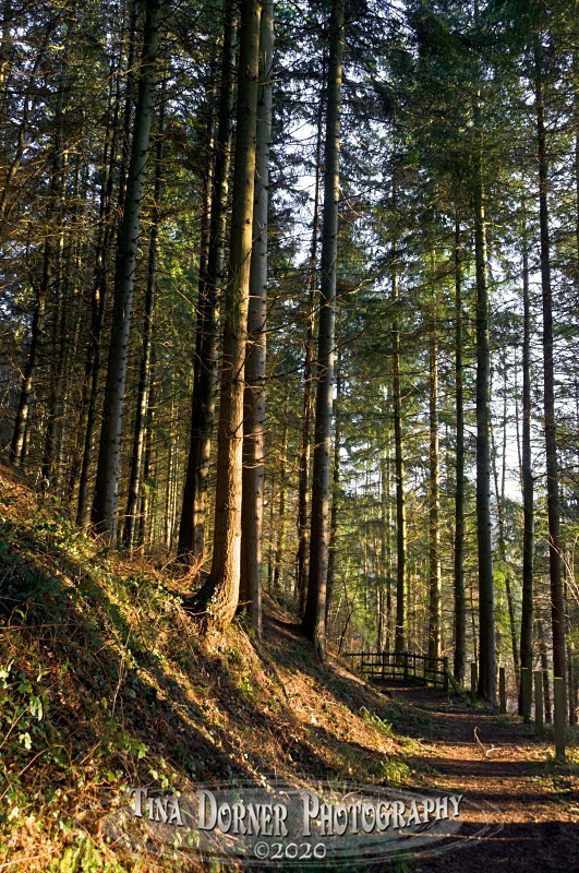Shadow pattern at sunset on path. Winter Landscape portfolio by Tina Dorner Photography,  Forest of Dean and Wye Valley, Gloucestershire