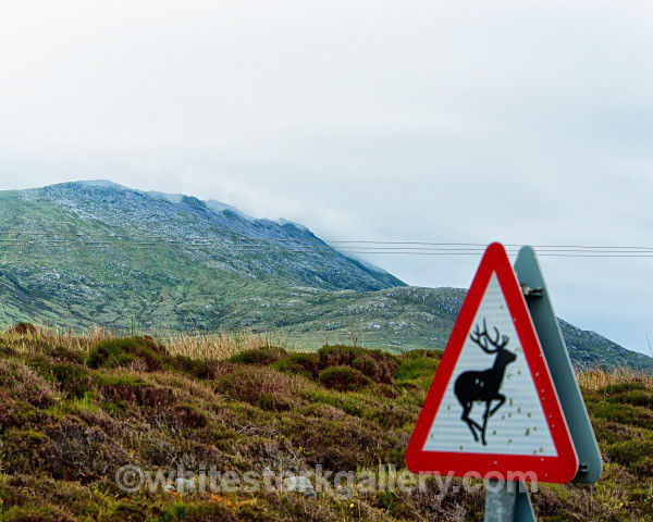 Target Practice Bullet Holed Sign! - Scottish Highlands