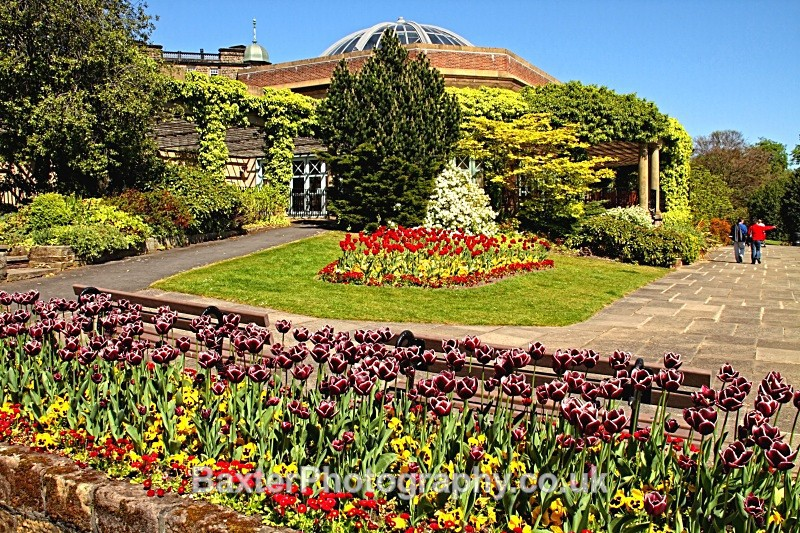 Spring Blooms At The Sun Pavilion - The Valley Gardens (Harrogate)