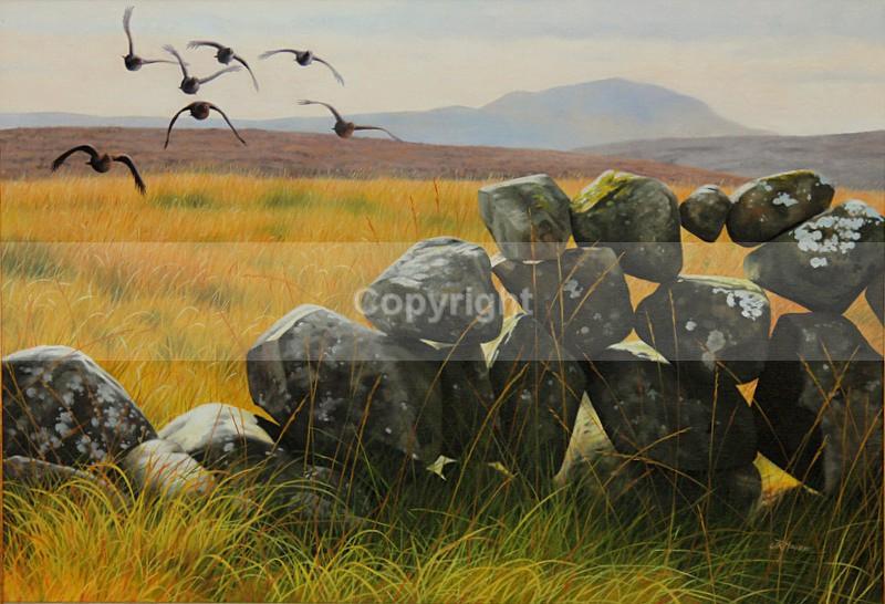SLEMISH COVEY - Birds