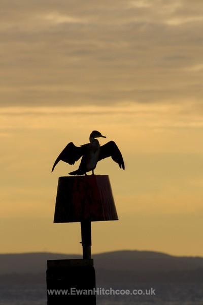 Early Bird - British Wildlife
