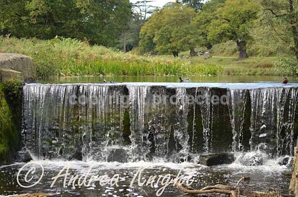 Waterfall Bradgate Park (© Andrea Knight) - Bradgate Park - Customer Images